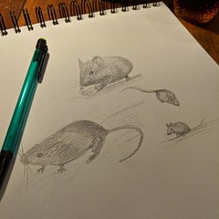 Learning about tube mice. #wip #sketching #london