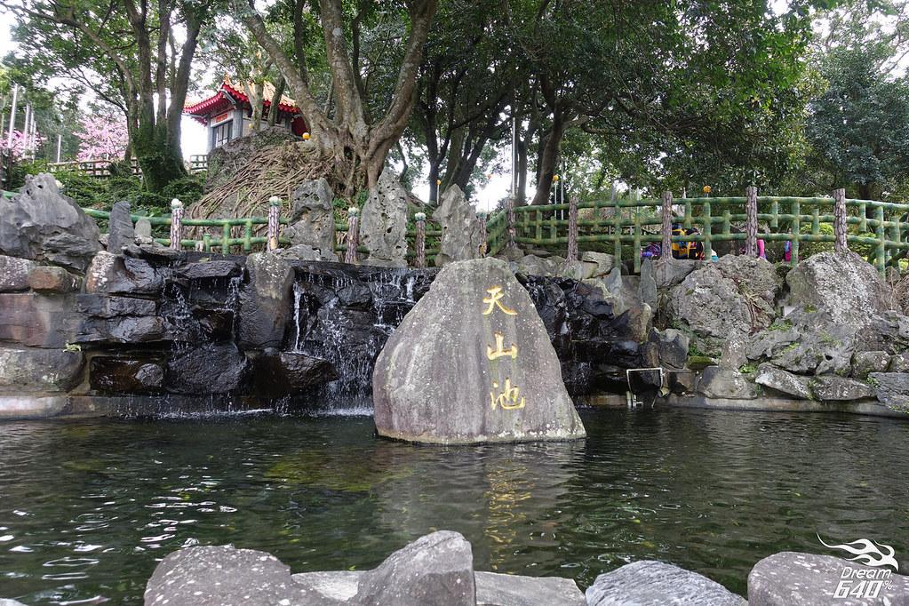 淡水天元宮後山-寒櫻-12