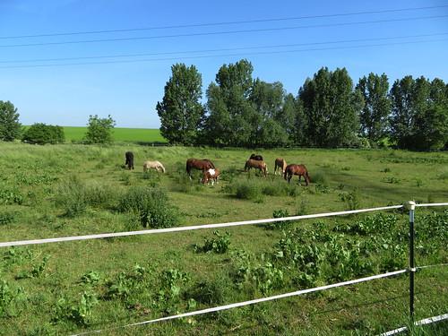 20170601 05 040 Regia Bäume Wiese Pferde