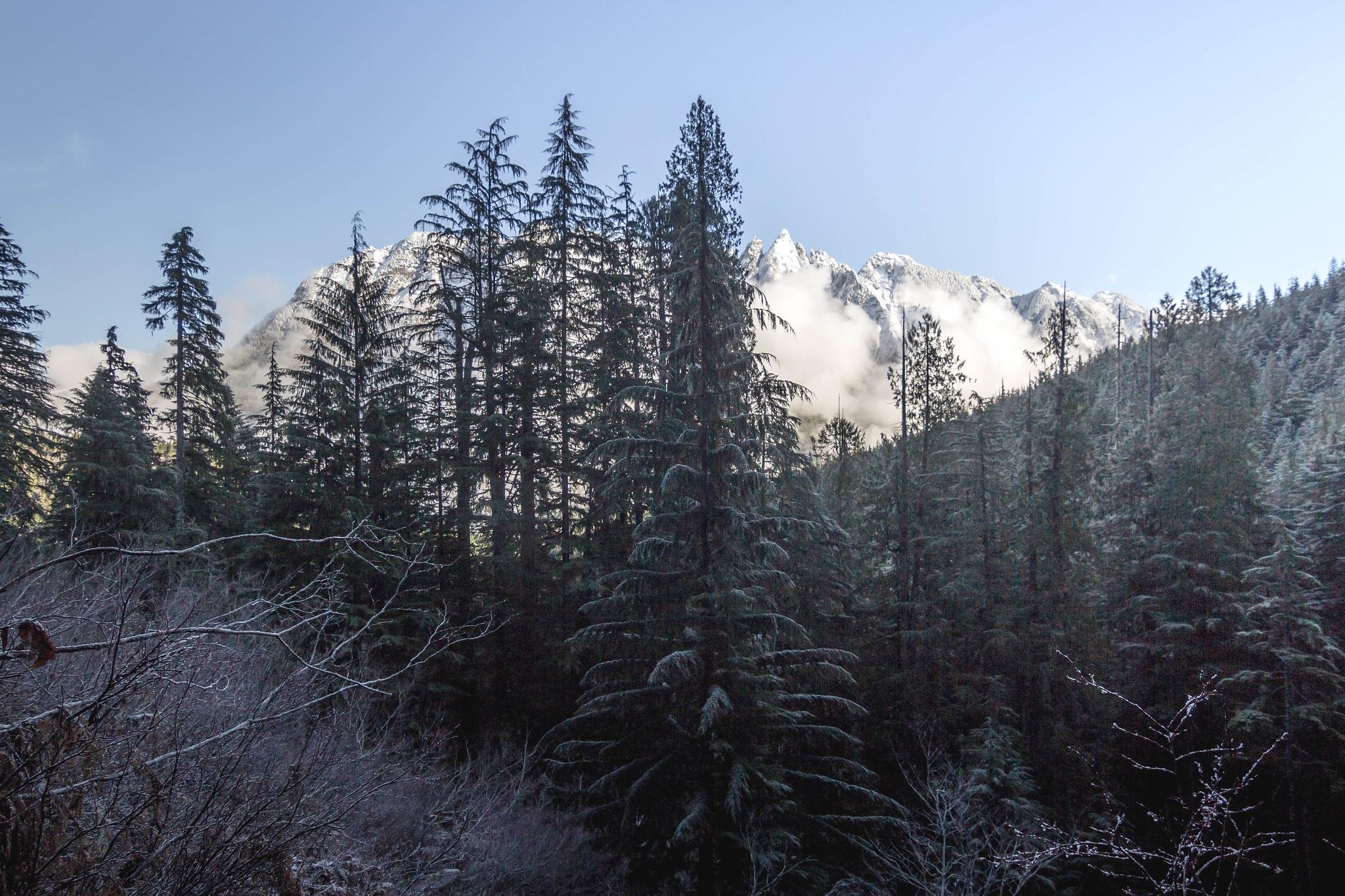 Mount Garfield through trees