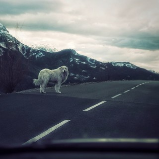Chance encounter on the road