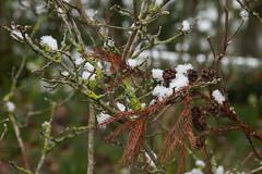 Neige dans le Jardin des Plantes