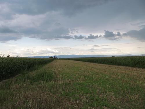 20140804 02 526 Jakobus Hügel Maisfeld Wolken