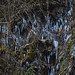 Icicles at Henrhyd Falls