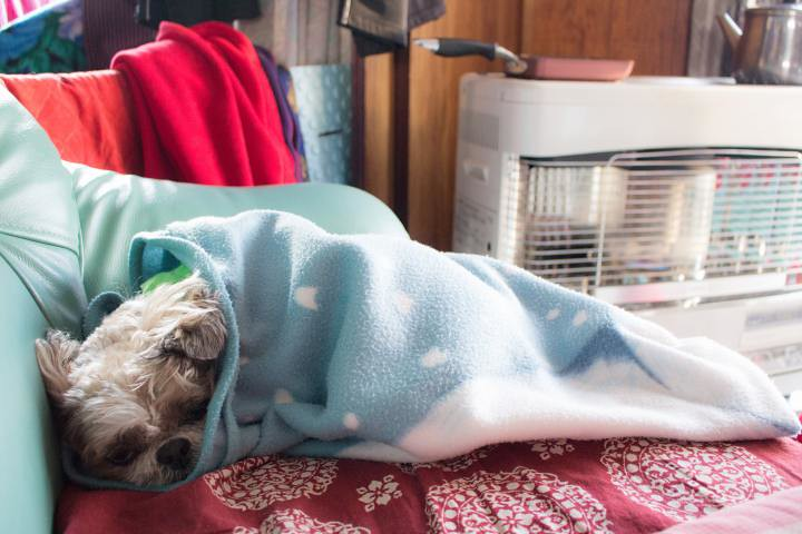 寒い冬の朝にフリースにくるまる犬