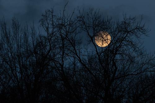 Coucher de lune à l'aube