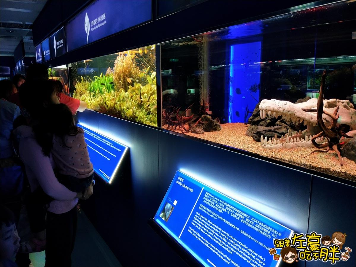 屏東生技園區國際級水族展示廳-16
