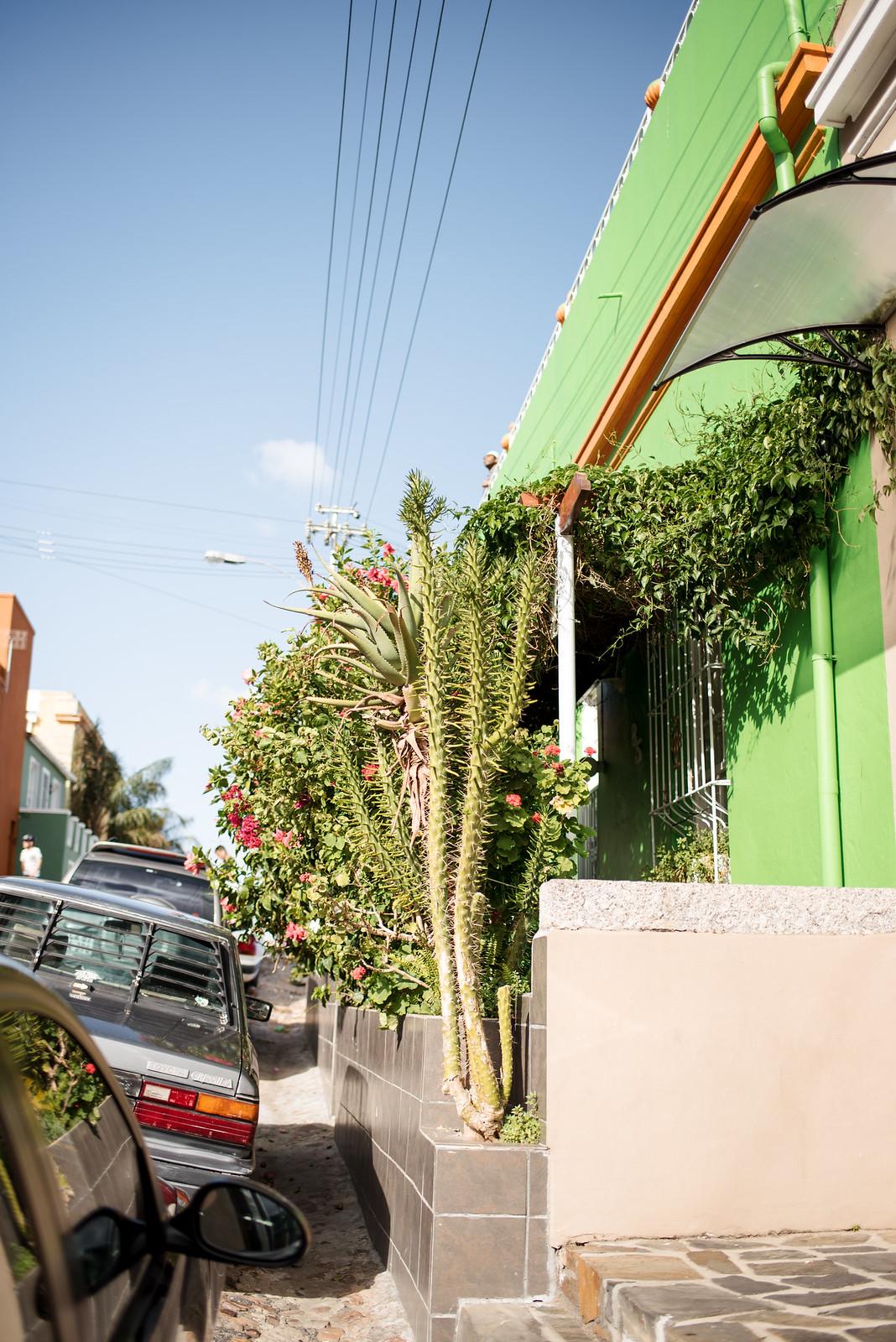 Houses and Plants on juliettelaura.blogspot.com