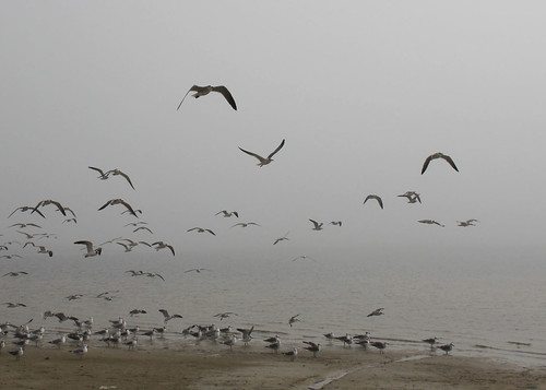pineislandstatepark florida gulfcoast beach ocean water shore park fog mist atmosphere depressing