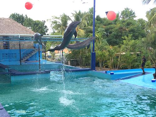 91 - Manati Park - Delphine / Dolphins 1