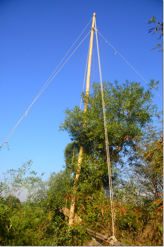 擄鴿集團掛網用竹竿 2
