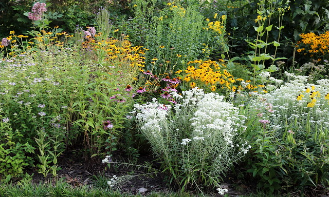 a 15-foot section with 10 different types of white, yellow, and pink blooming native plants