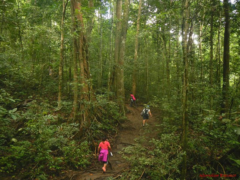 Trail to Pico De Loro's summit