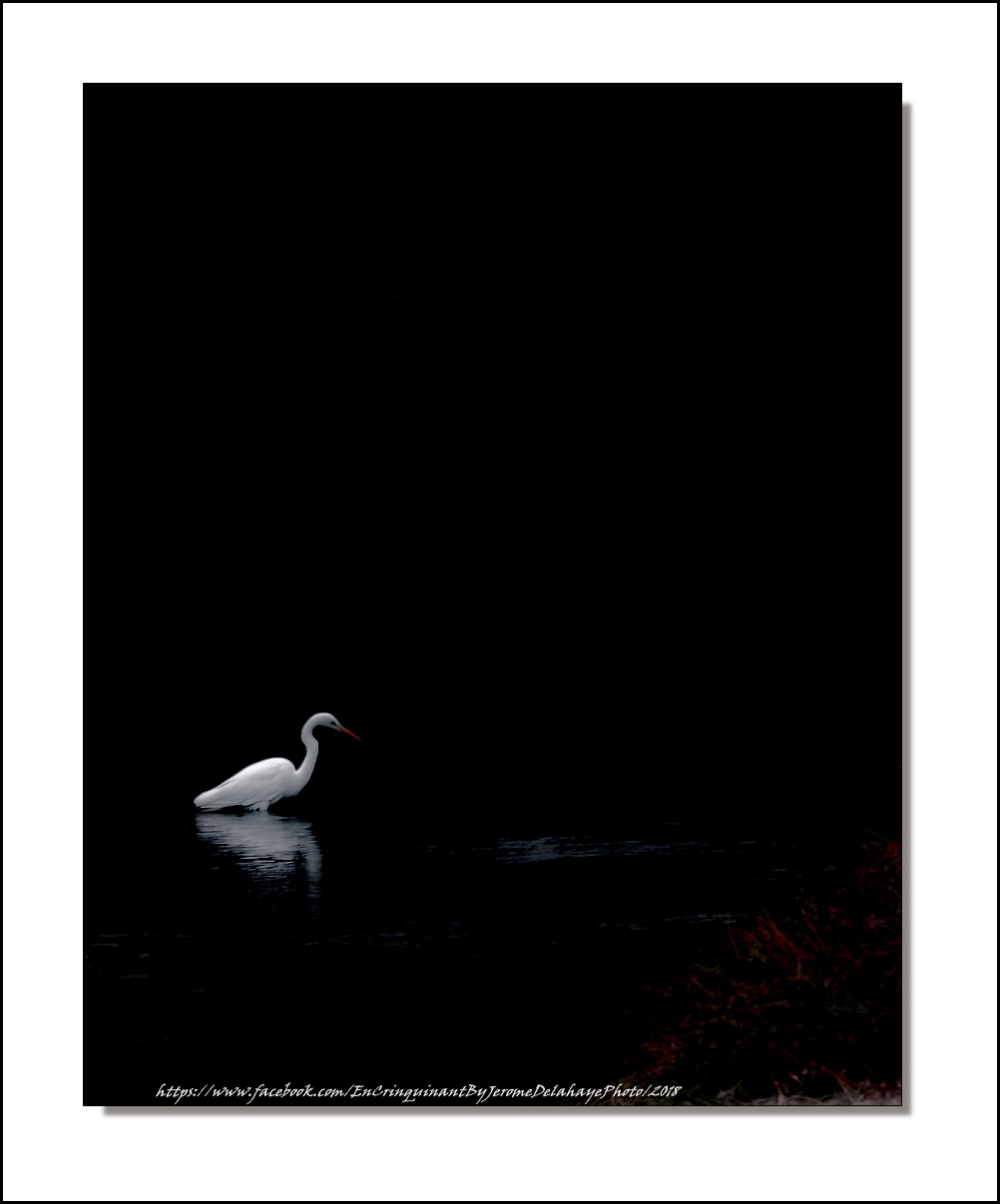 """"""" L'Oiseau blanc """" 39896099791_fef561e455_o"""
