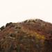 Mt. La Spina - Yellows & Reds