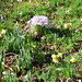 Crocus and daffodils at Painshill Park