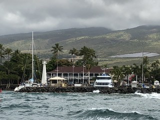 Whale Watch from Lahaina Harbor