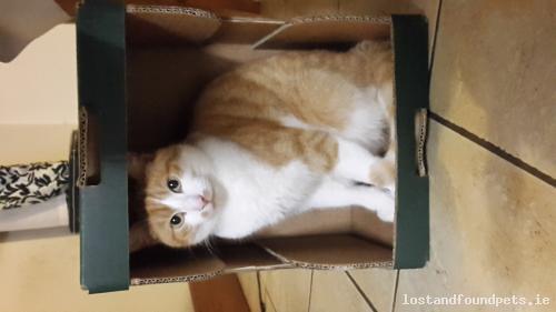 Sat, Feb 10th, 2018 Lost Male Cat - L1614, Mayo