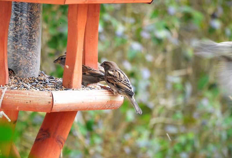 Sparrows 23.02 (3)