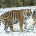 Zoo in Snow