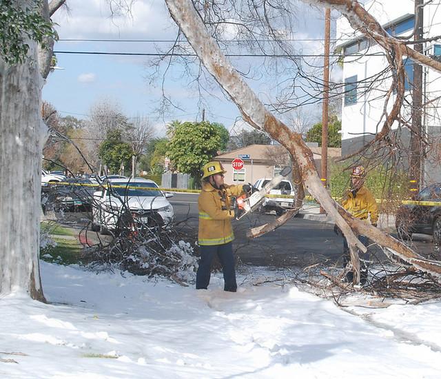 Toppled Tree Creates Hazard in North Hollywood
