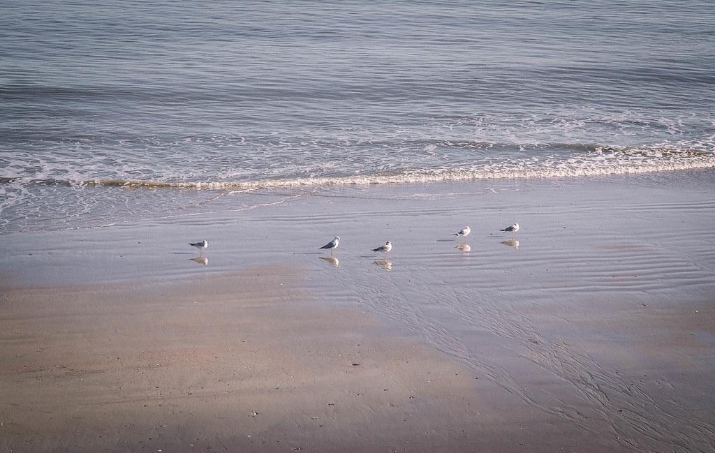 Edisto beach_DSF1135