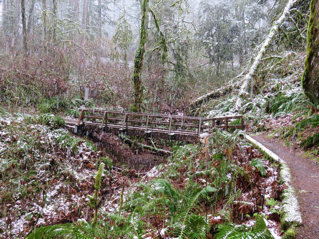 Footbridge along the Old Growth Trail