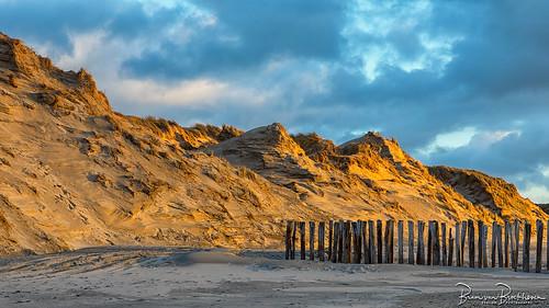 Golden sunlight on the dunes