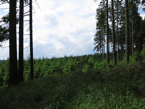 20170605 07 130 Regia Wald Bäume
