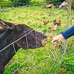 """2017-09-13_16-02-07 - Esel Fütterung - """"Nun gib schon her!"""""""