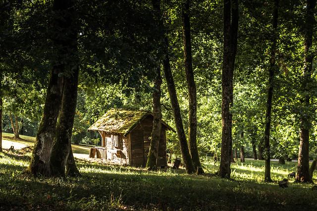 Au milieu des bois