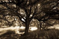 Forest - O. P. Schnabel Park - San Antonio - Texas - 23 April 2017