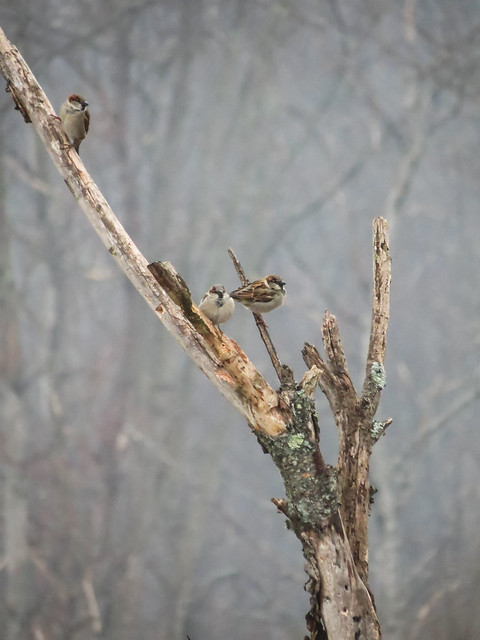 Birdies on a branch
