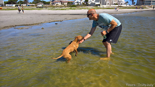 The lagoon at Lagoon Beach is shallow enough to allow safe play for children as puppies alike.