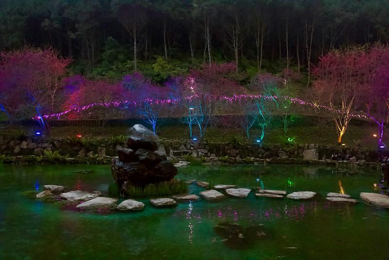 台灣第一夜櫻 九族文化村櫻花湖