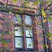 University Area Window, Liverpool, UK