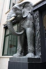 Elefant - elephant