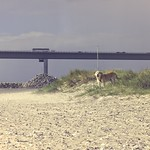 2015-09-05_15-16-33 - Wind und Hund am  Fehmarnsund