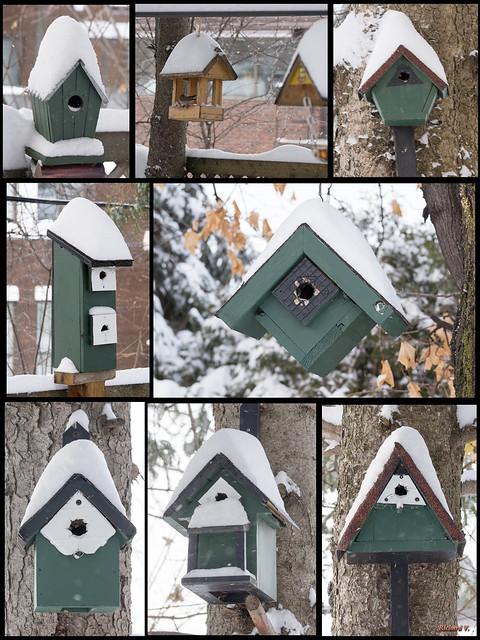 Neige sur les nichoirs d'oiseaux. Québec, Canada