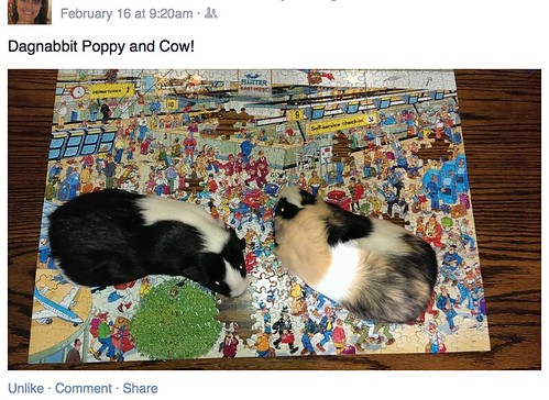 poppy-and-cow