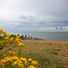 Yellow Flowers of Whitstable