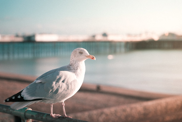 Brighton Bather