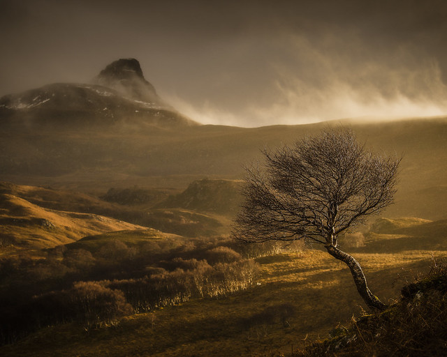 Stac Pollaidh and Tree