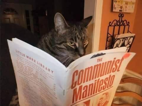 Commie Cat