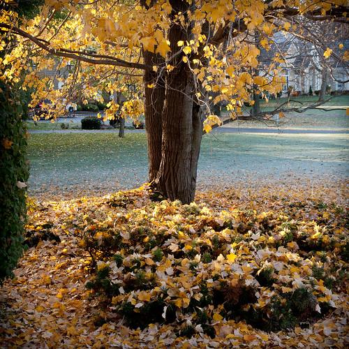 secondlook autumn bartelllane trees webster newyork unitedstates us