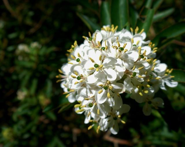 flores brancas, Nikon COOLPIX S5300
