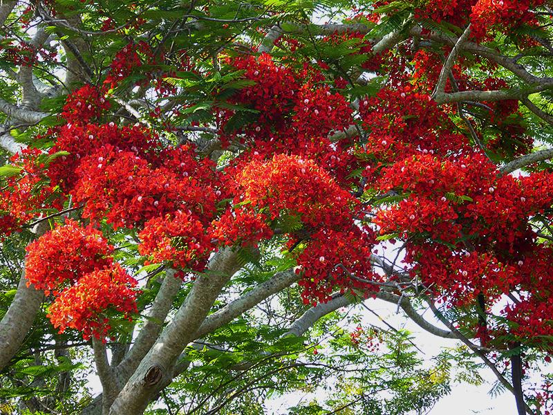 The 'Around the Island' Trip – Efate Island, Vanuatu.