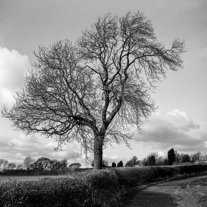 FILM - Winter tree