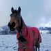 trawden first snow 13 019_pe