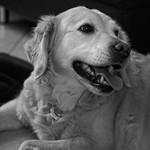2017:12:31 21:13:49 - Hund - Tarbek